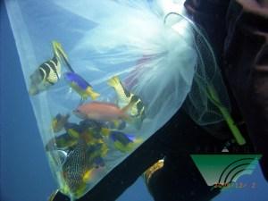 ikan-hias-di-plastik
