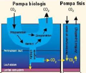 Penyerapan carbon dilaut