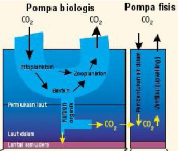 biological n physhical pump