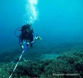 Survey Reef Health di perairan Alor