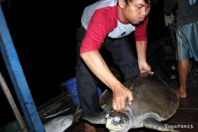 1'st Handling Bycatch