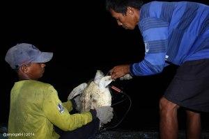 bycatch in Paloh